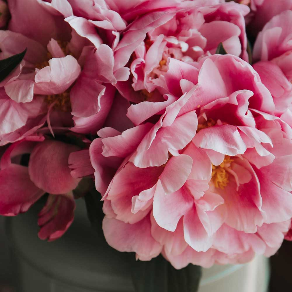 helena-denley-wellness-pro-hero-pinkflowers