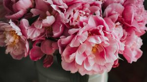 Pink flowers in a pot