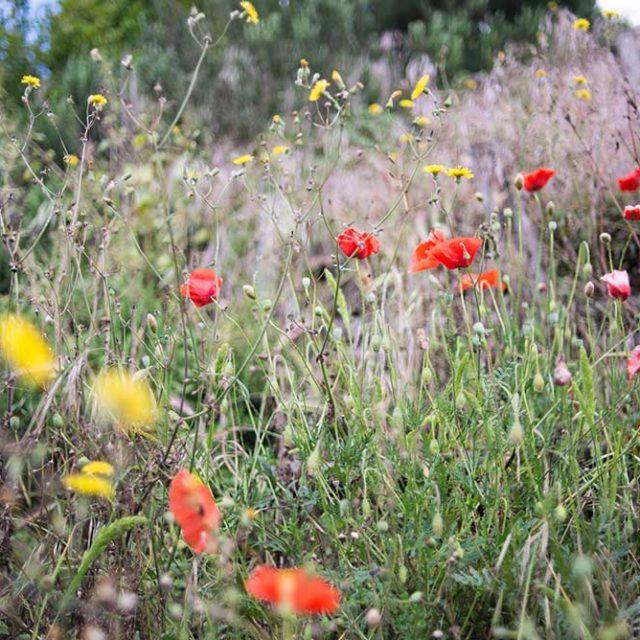 Mental weeding and gardening